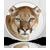 os-x-mountain-lion%e3%80%81%e3%82%bd%e3%83%95%e3%83%88%e3%82%a6%e3%82%a7%e3%82%a2%e3%83%bb%e3%82%a2%e3%83%83%e3%83%97%e3%83%87%e3%83%bc%e3%83%88%e6%a9%9f%e8%83%bd%e3%82%92mac-app-store%e3%81%ab